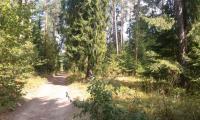 Supraśl urocze miasto na Podlasiu zdjęcie 6