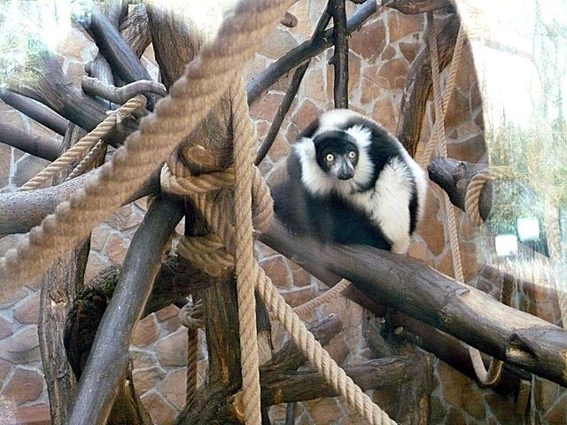 Ogród Zoobotaniczny w Toruniu