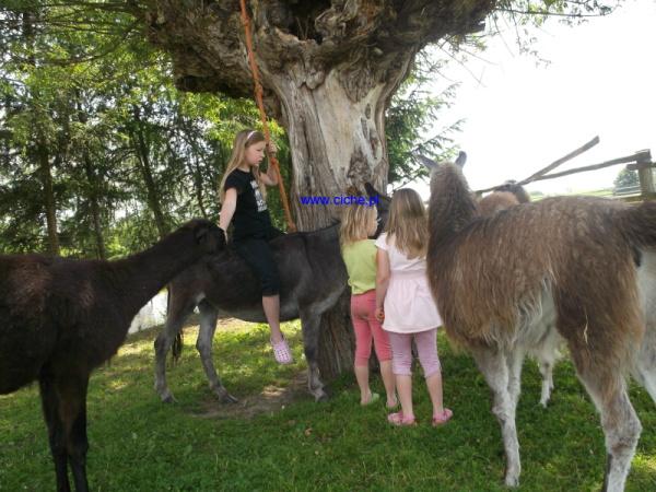 Pensjonat Cichy w Cichem 7