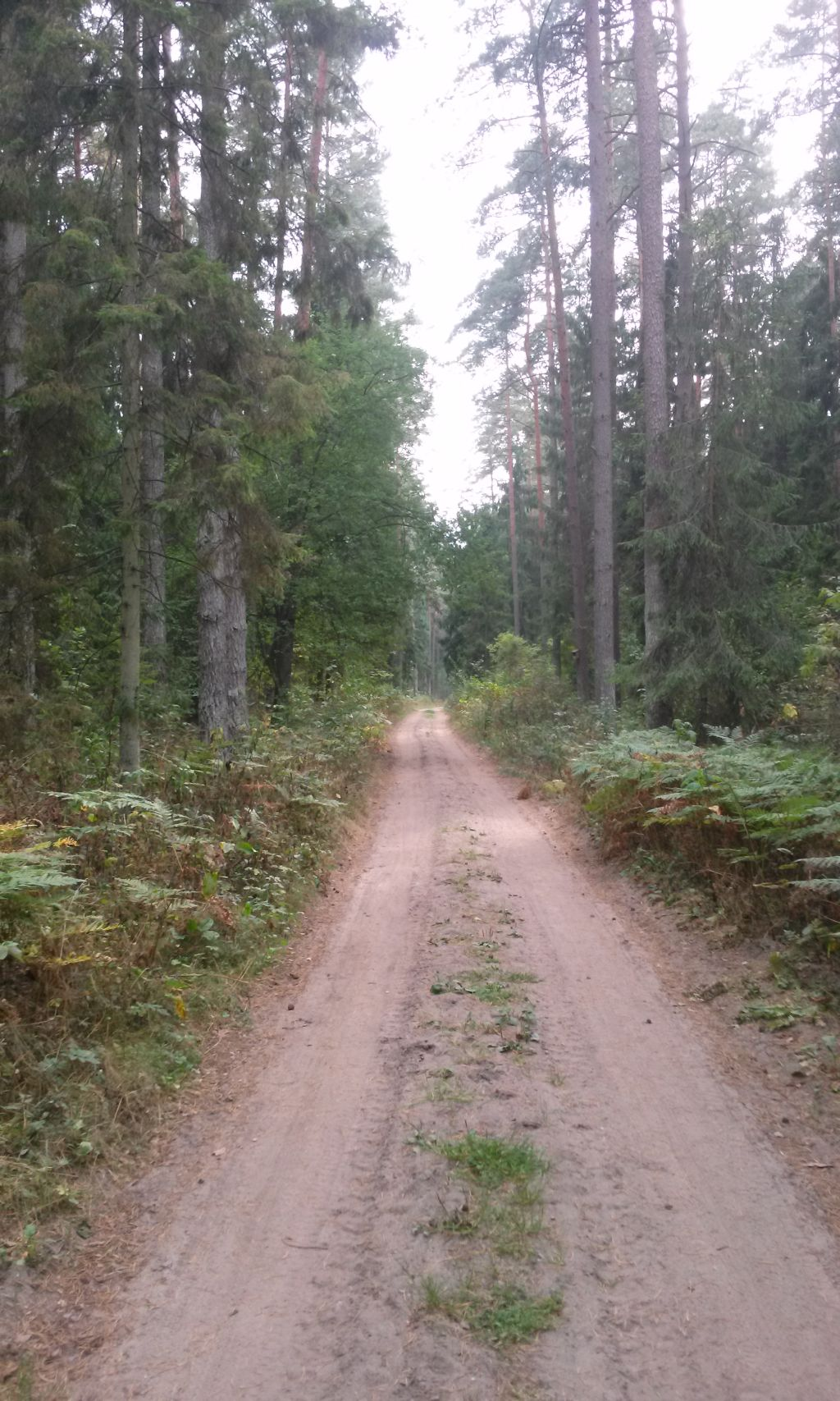 Trasy rowerowe Supraśl - Puszcza Knyszyńska 10